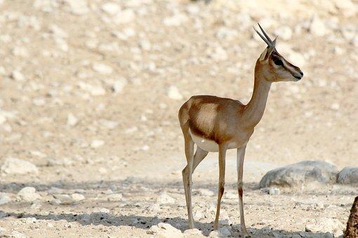 Wildlife Park, Oryx, Park, Wild, Safari, Nature, Fauna