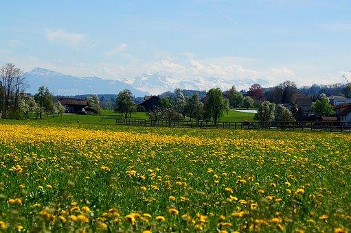 Fruelingswiese, Rigi, Alpine, Freiamt, Panorama