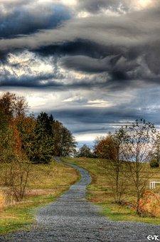 Horse, Trail, Skies, Brilliant, Trees, Nature