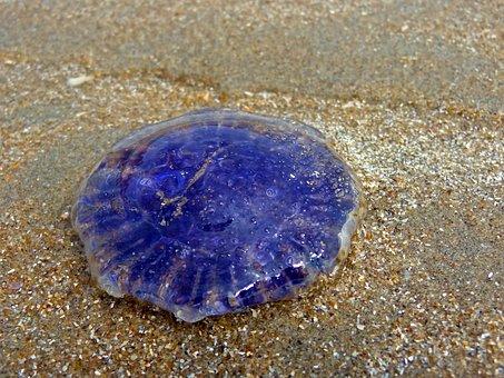 Jellyfish, Beach, Sea, North Sea, Blue, Sand, Toxic