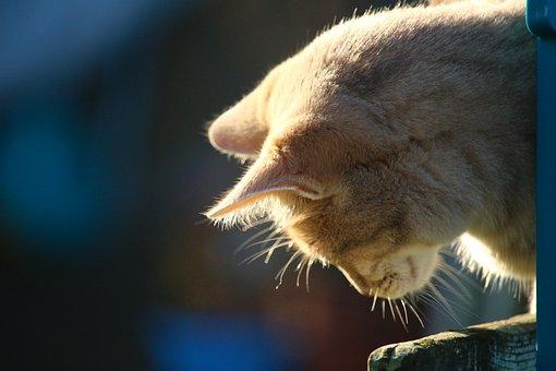 Cat, Mackerel, Kitten, Breed Cat, Moustache, Tiger Cat
