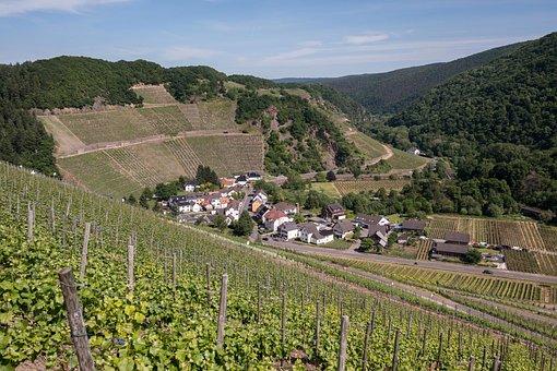 Vineyard, Wine, Winegrowing, Marienthal, Grapevine