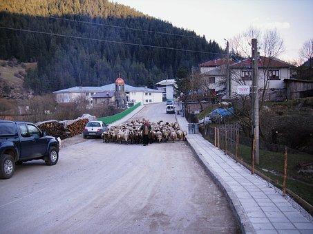 Trigrad, Bulgaria, Village, Man, Sheep, Road, Mountains