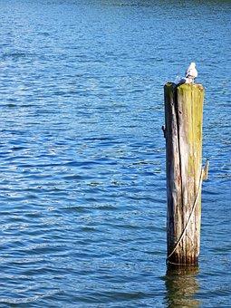 Sea, Travemünde, Water, Wood, Pile, Peg, Kai, Lake