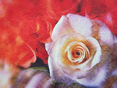 Rose, Rose Painting, White Rose, Rose Bloom, Blossom