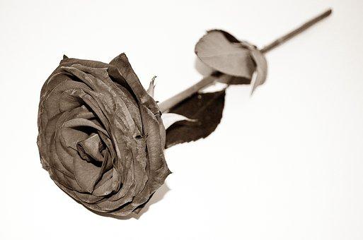 Dead, Roses, End, Sadness, Flowers, Season, Macro