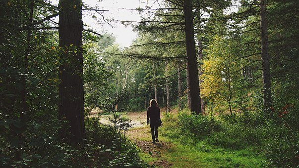 Man, Walking, Trip, Forest, Walk, Park, Adventure