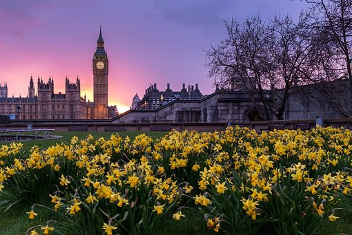 Architecture, Blooms, Blossoms, Buildings, City