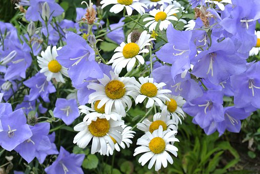 Bluebells, Flower, Flowers, Blue, White, Yellow, Nature