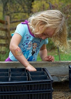 Acorn Planting, Child, Acorn, Plant, Nature, Girl, Fun