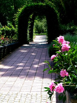 Flowers, Archway, Green Archway, Peony, Away, Park