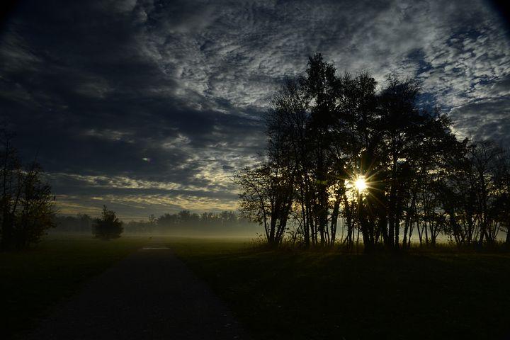 Dawn, Park, Trees, Monza Park, Light, Silhouettes