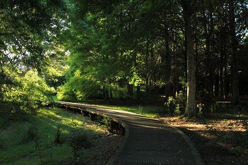 Forest, Walkway, Park, Nature, Outdoor, Pathway