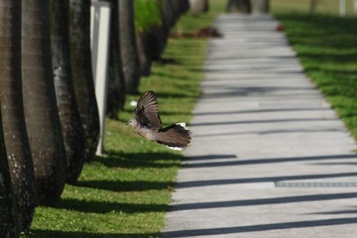 Pathway, Bird, Infinite, Green, Nature, Side, Forest
