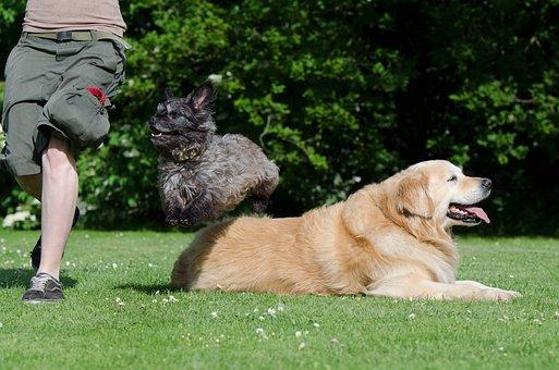 Dog Trick, Tricks, Dog Show Trick, Sweet, Funny