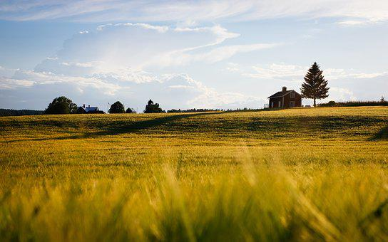 Agriculture, Blur, Countryside, Cropland, Daylight