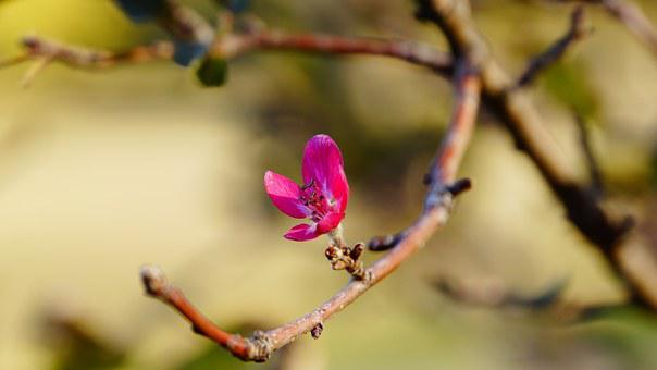 Red, Nature, Tree, Flower, Pink, Spring, Flowers