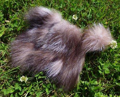 Fur, Fox, Silver Cross Fox, Cross Fox, Taxidermy, Grass