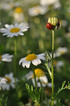 Nature, Flower, Spring, Plant, Insect, Ladybug