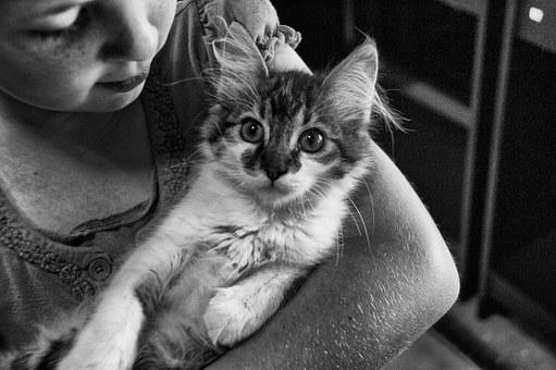 Girl, Cat, Young, Female, Animal, Pet, Cute, Child