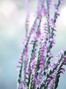 Morning, Sensation Of Coolness, Wild Grass, Flowers