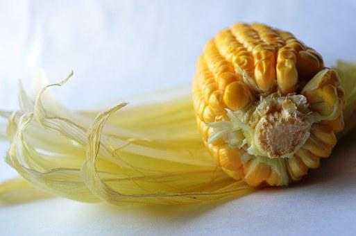 Corn, Maize, Starch, Food, Nutrition, Yellow, Crop