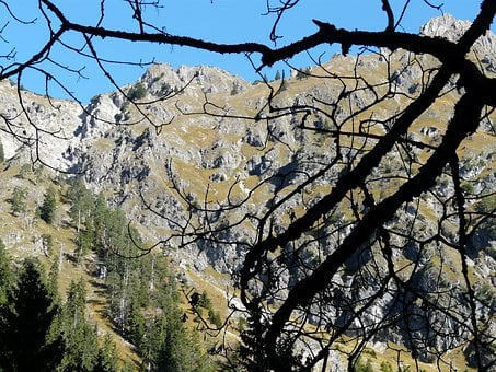 Mountains, Alpine, Allgäu, Hike, Sunny Day, Tree
