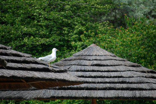 Gull, Alone, Thatched Roof, Zoo, Seagull, Topical Huts