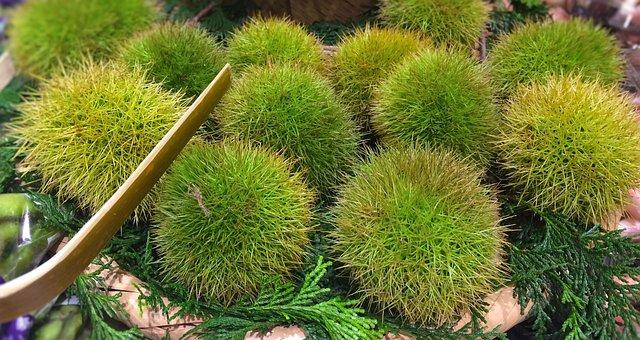 Chestnut, Autumn Of Taste, Bamboo Shears, Green