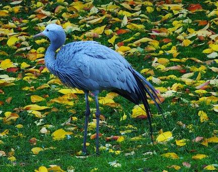 Stork, Bird, Animal, Flying, Rattle Stork, Plumage, Zoo