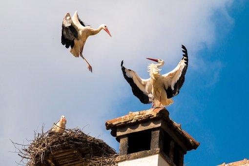 Storks, Birds, Animal, Storchennest, Fly, Nest, Plumage