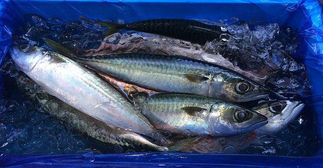 Fish, Ice, Blue, Seiyu Ltd, Living, Supermarket