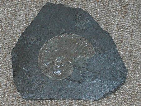 Cupid, Petrification, Slate, Stone, Nature, Prehistoric