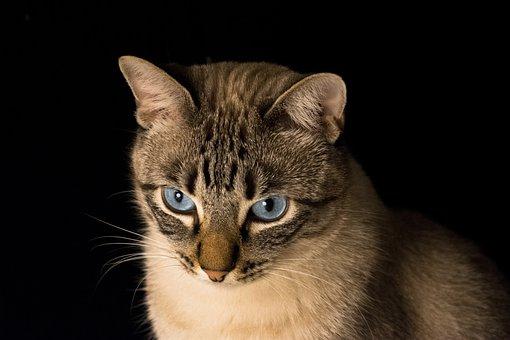 Cat, Pet, Look, Animal, Feline, Animals, Kitten, Cute