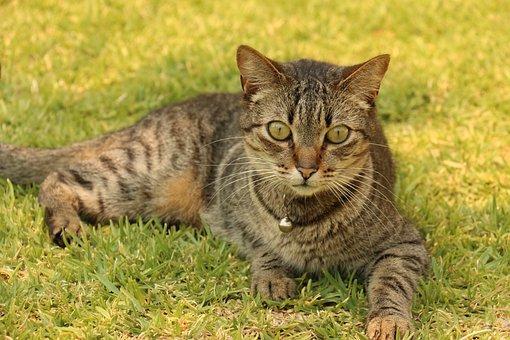 Gata, Cat, Feline Look, Kitten, Tuned, Feline Stopped