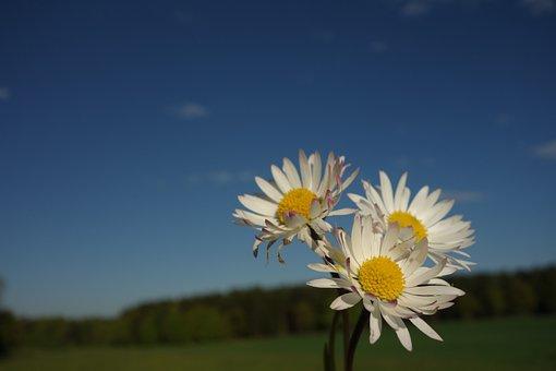 Margin Rides, Flower, Mage Rites, Spring