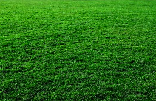 Background, Green, Grass, Lawn, Greenery