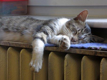 Cat, Sleep, Radiator, Heat, Kitty, Young, Animal