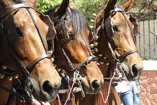 Horses, Spanish Horses, Horse, Horse Head, Fiesta