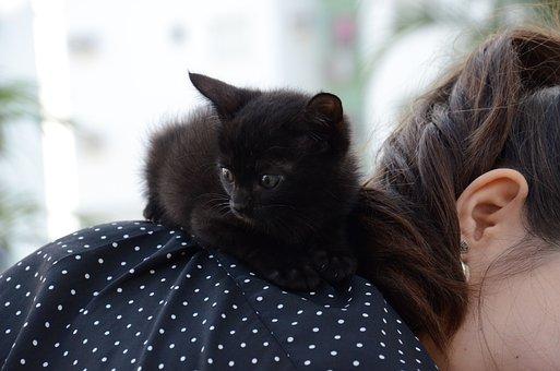 Kitten, Cat On Shoulder, Black Cat, Puppy, Feline Look