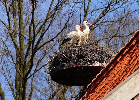 Birds, Storks, Animals, Plumage, Rattle Stork, Nature
