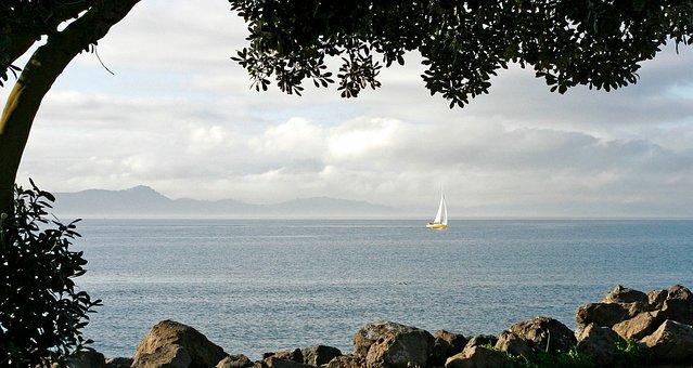Sailboat, Yellow Sailboat, Trees, San Francisco Bay