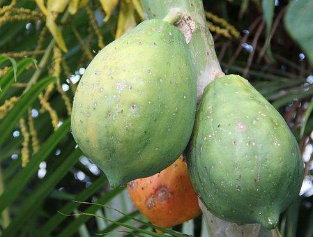 Ripe Papaya, Unripe Papaya, Carica Papaya, Exotic