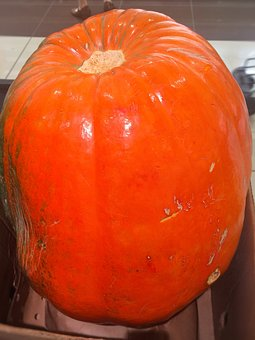 Very Big, Pumpkin, Halloween, Orange, Huge, October