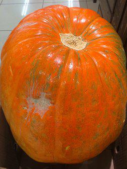 Very Big, Pumpkin, Huge, Halloween, Orange, October