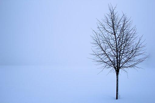 Treet, Snø, Vinter, Landskapet, Hvit, Bakgrunner, Tåke