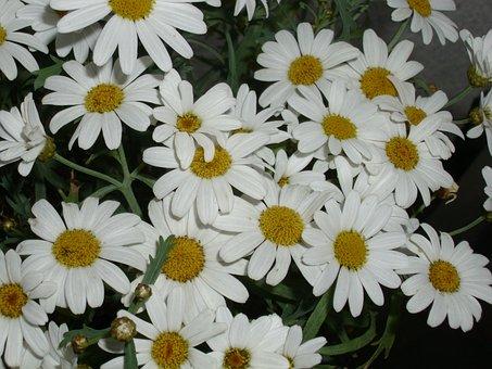 Floral, Margin Renon, White, Flowers