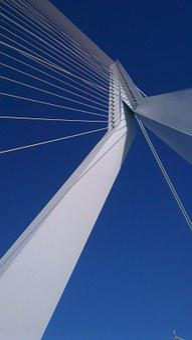 Rotterdam, Swan, Erasmus Bridge, Air