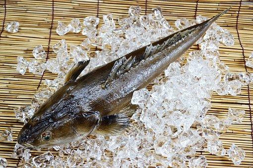 Fish, Sea, Seafood, Food, Platycephalus, Marine, Animal