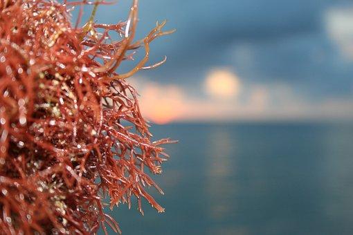 Algae, Water, Sea, Caribbean, River Algae